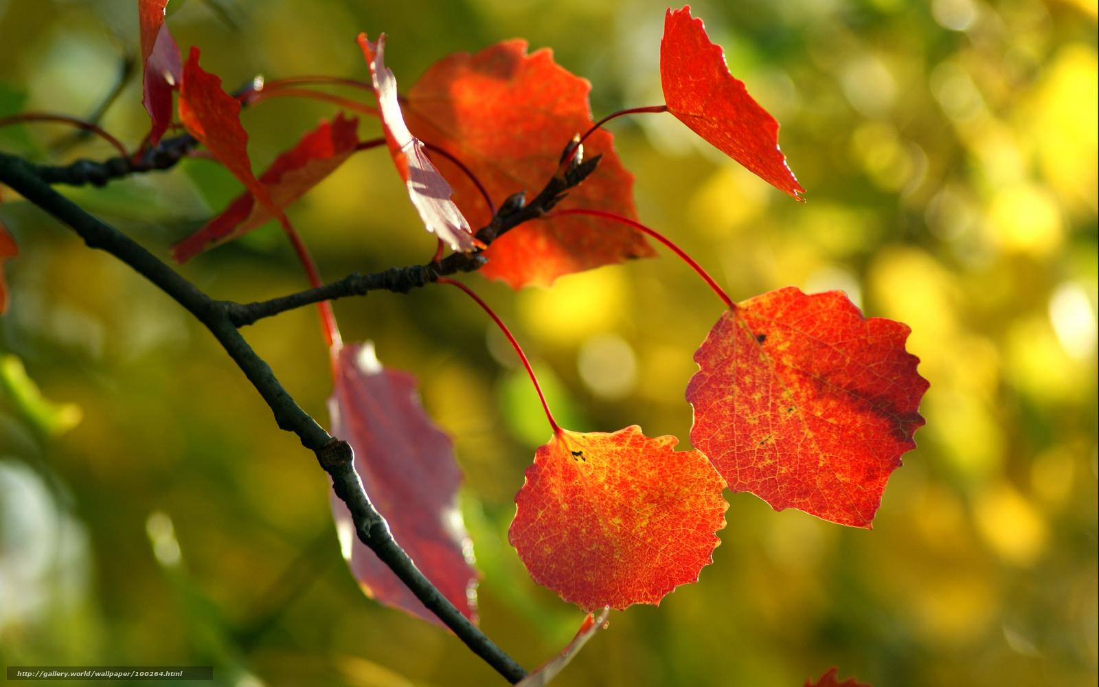 обои природа, красивые обои с природой ...: ru.gde-fon.com/download/priroda_krasivye-oboi-s-prirodoj_osen...
