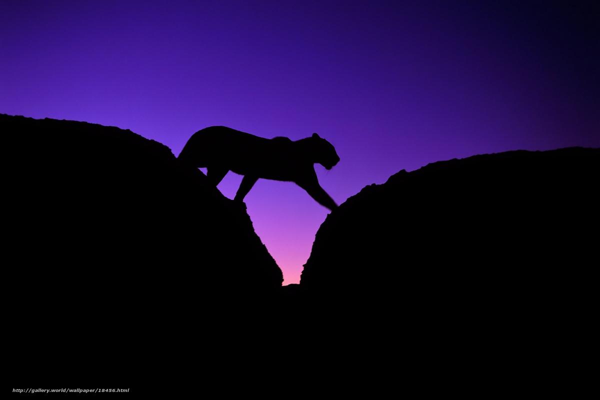 Download wallpaper leopard,  stones,  silhouette free desktop wallpaper in the resolution 1920x1280 — picture №18456