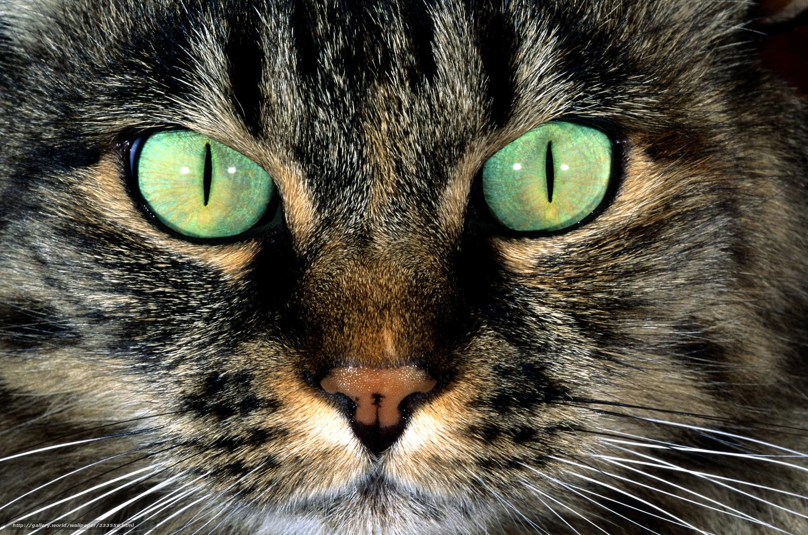 下载壁纸 猫, 猫, 吻部, 眼睛 免费为您的桌面分辨率的壁纸 4193x2778