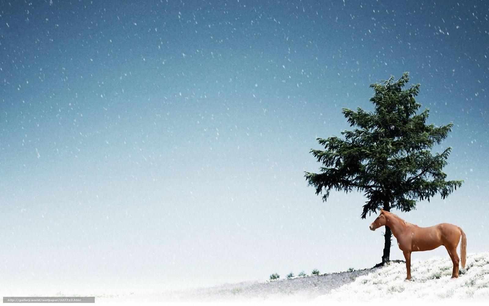 Tlcharger fond d 39 ecran cheval arbre boule de neige fonds - Arbre boule de neige ...
