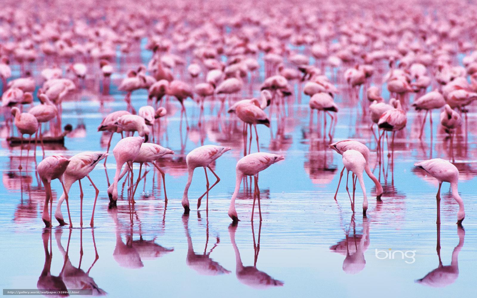 Download wallpaper animals,  Birds,  flamingo free desktop wallpaper in the resolution 1920x1200 — picture №328841