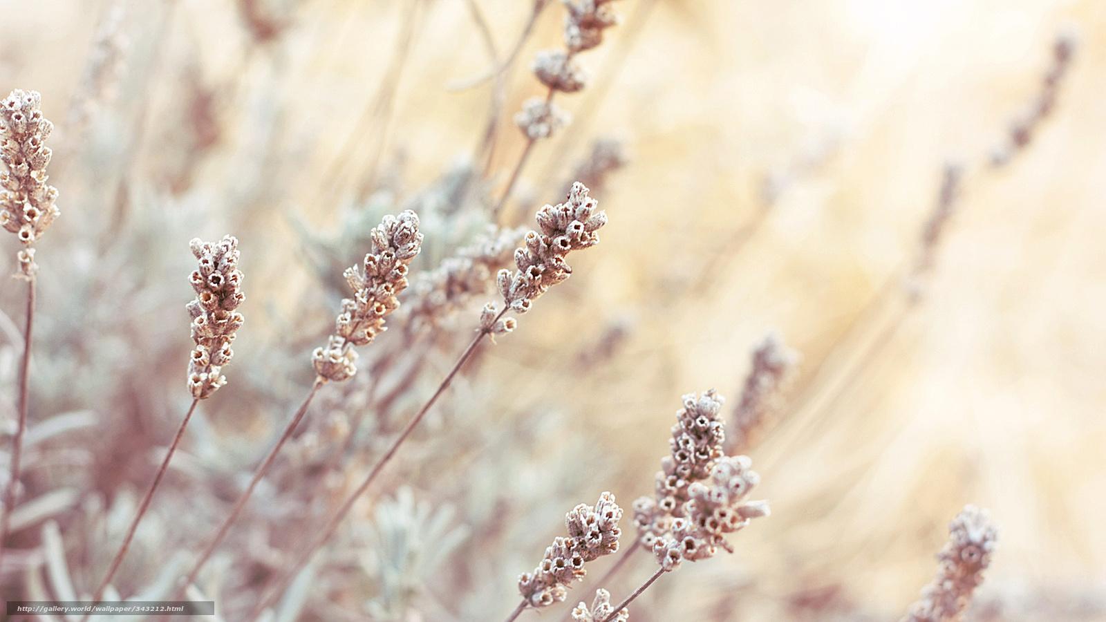 Обои Соцветия, полевых, трав.