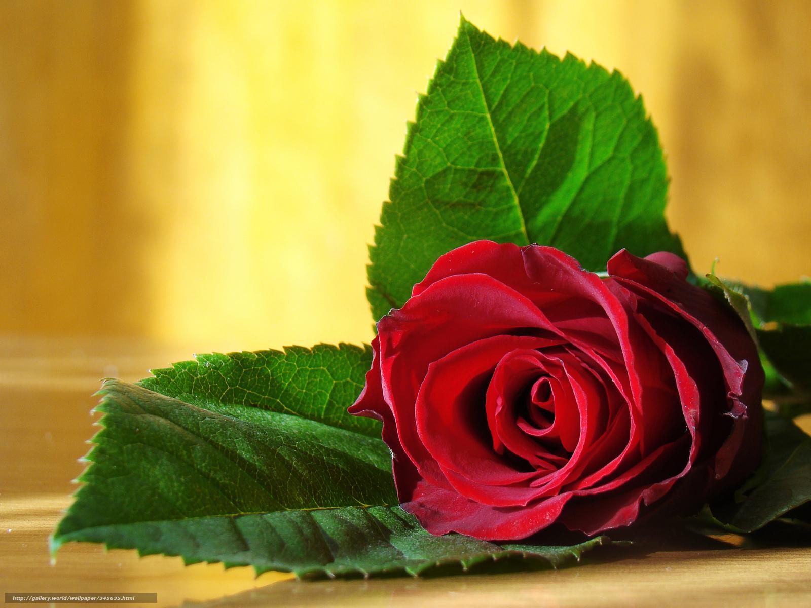 картинки цветы красивые бесплатно:
