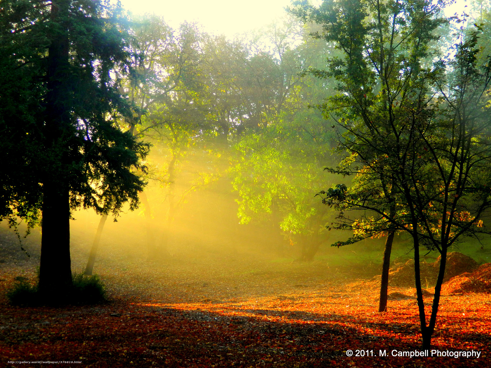 Download wallpaper morning dawn forest sun free desktop wallpaper