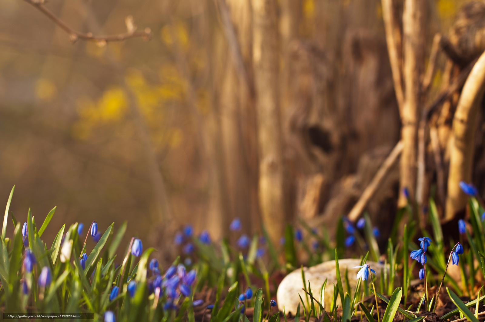скачать картинки весна: