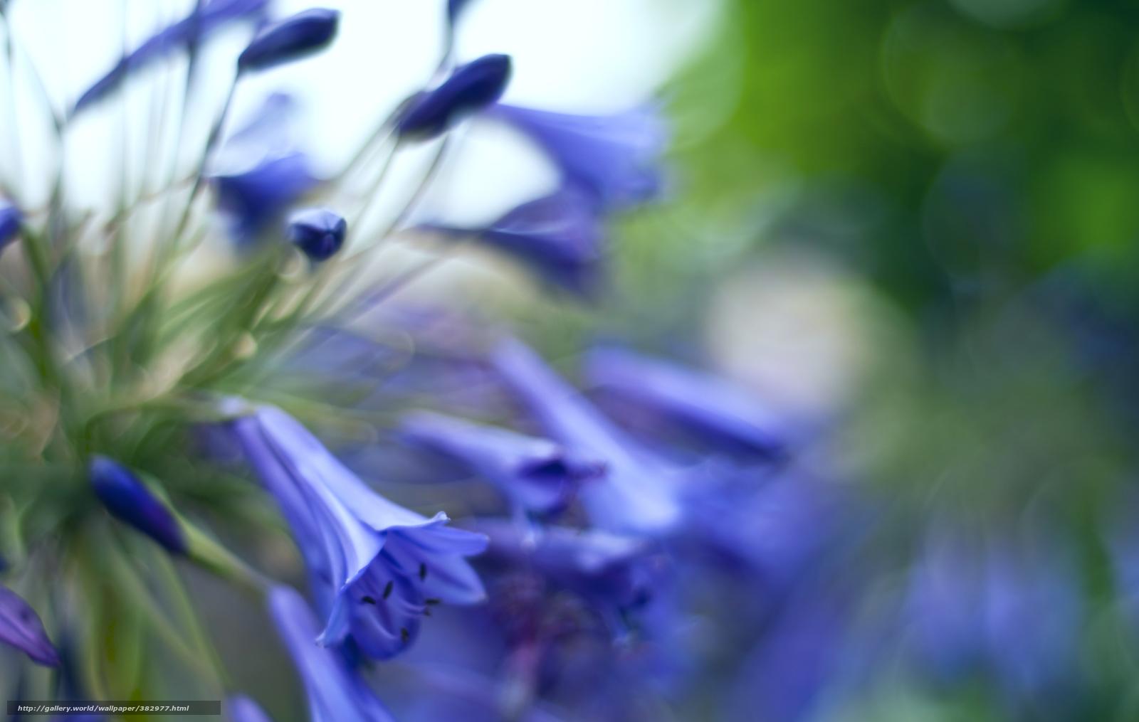 Картинки синие цветы на белом фоне - 6ab