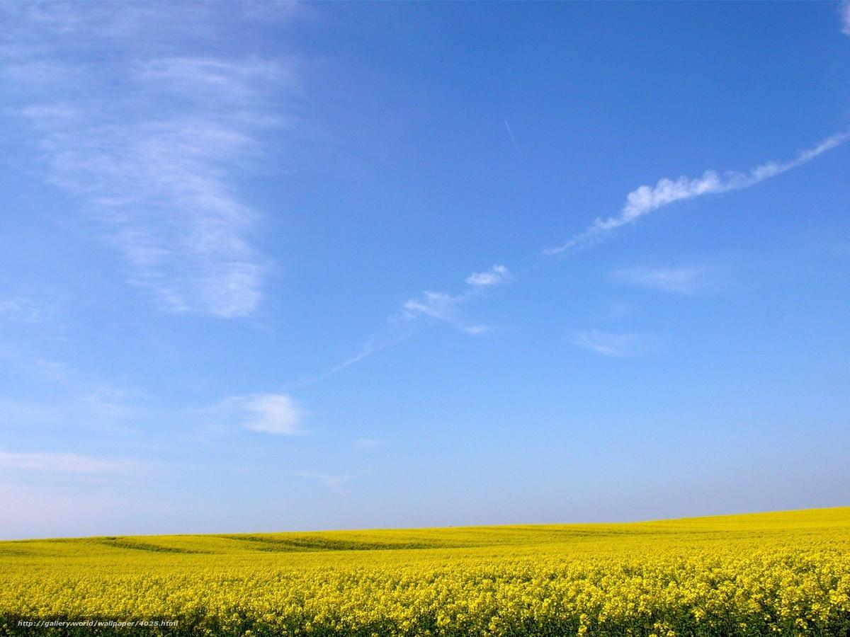 Скачать обои желтое поле цветы небо