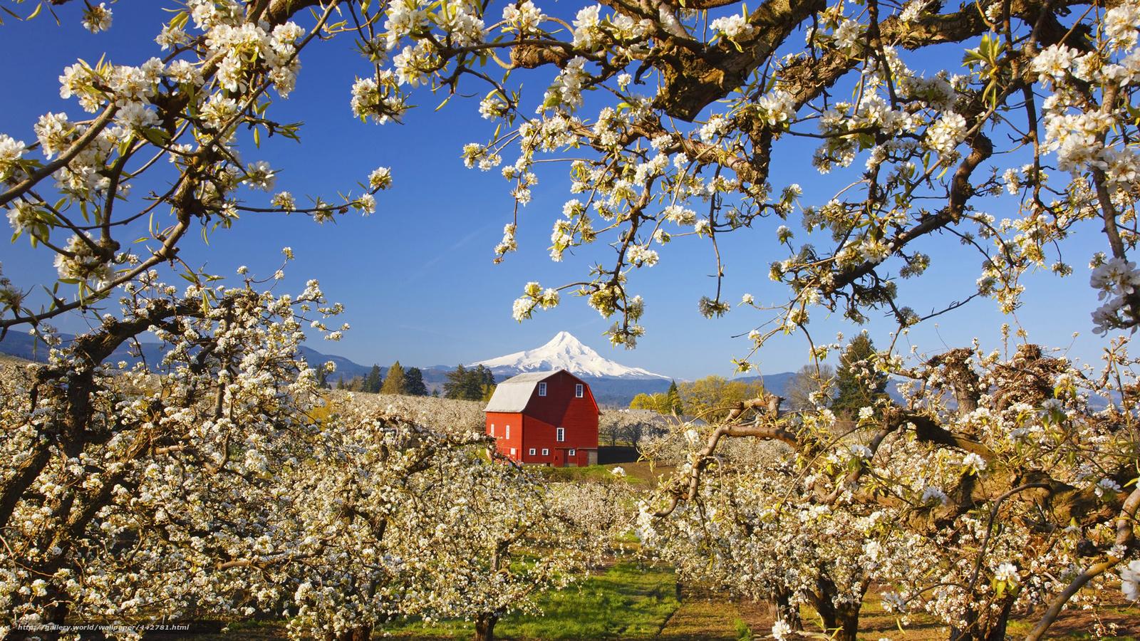 Яблони дом пейзаж гора сад деревья
