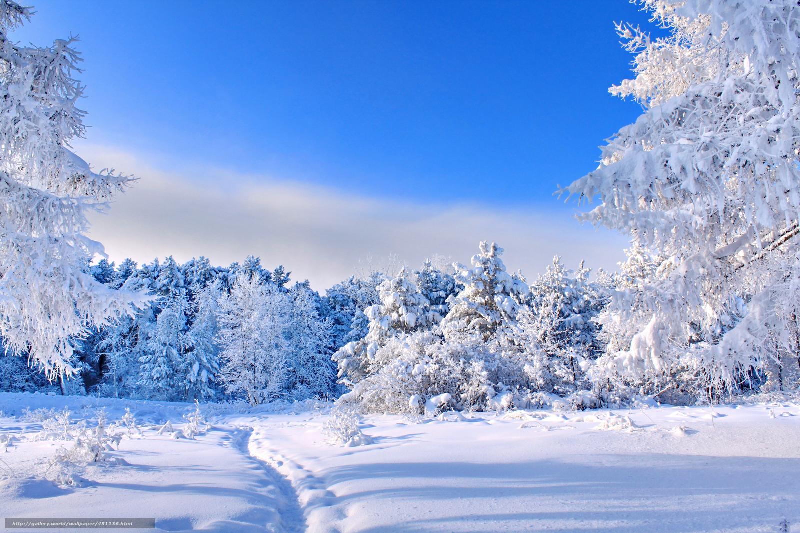 Скачать обои зима снег деревья