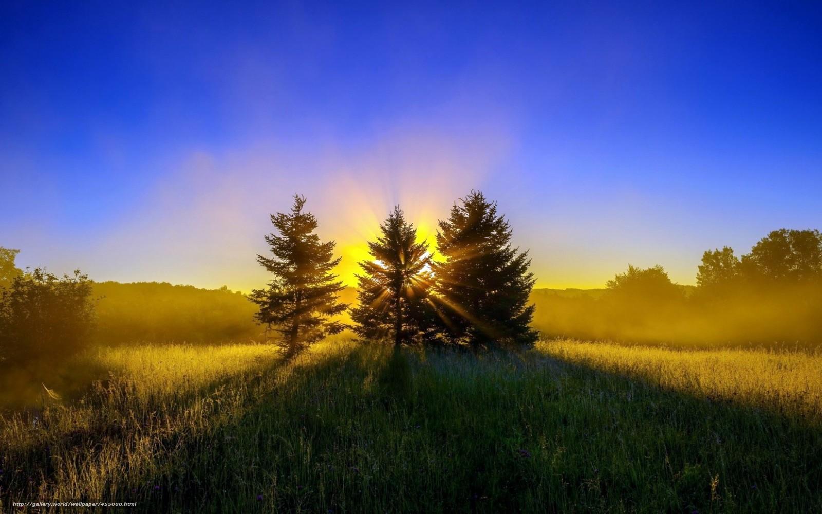 Опушка зелёная трава лес деревья