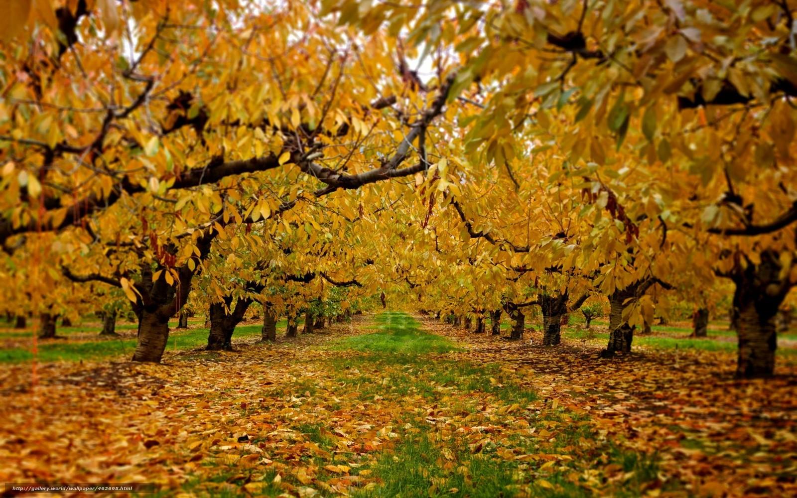 Сад осень природа все бесплатно на
