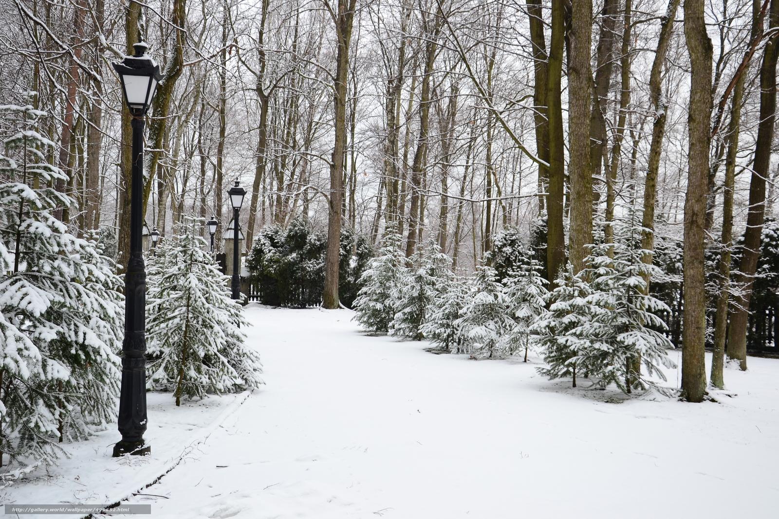 Фото зимой в парке