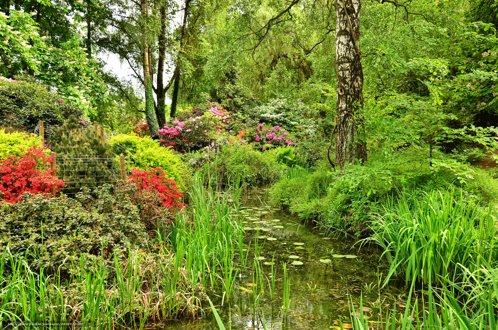 Обои для рабочего стола сад пруд парк