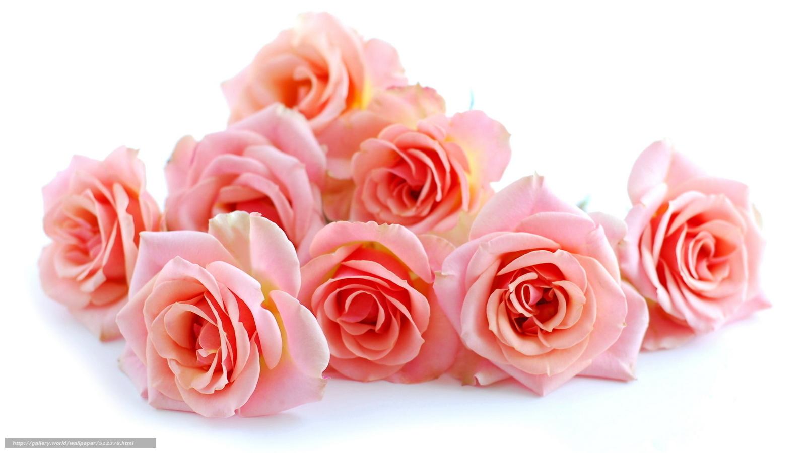 скачать красивые картинки цветы:
