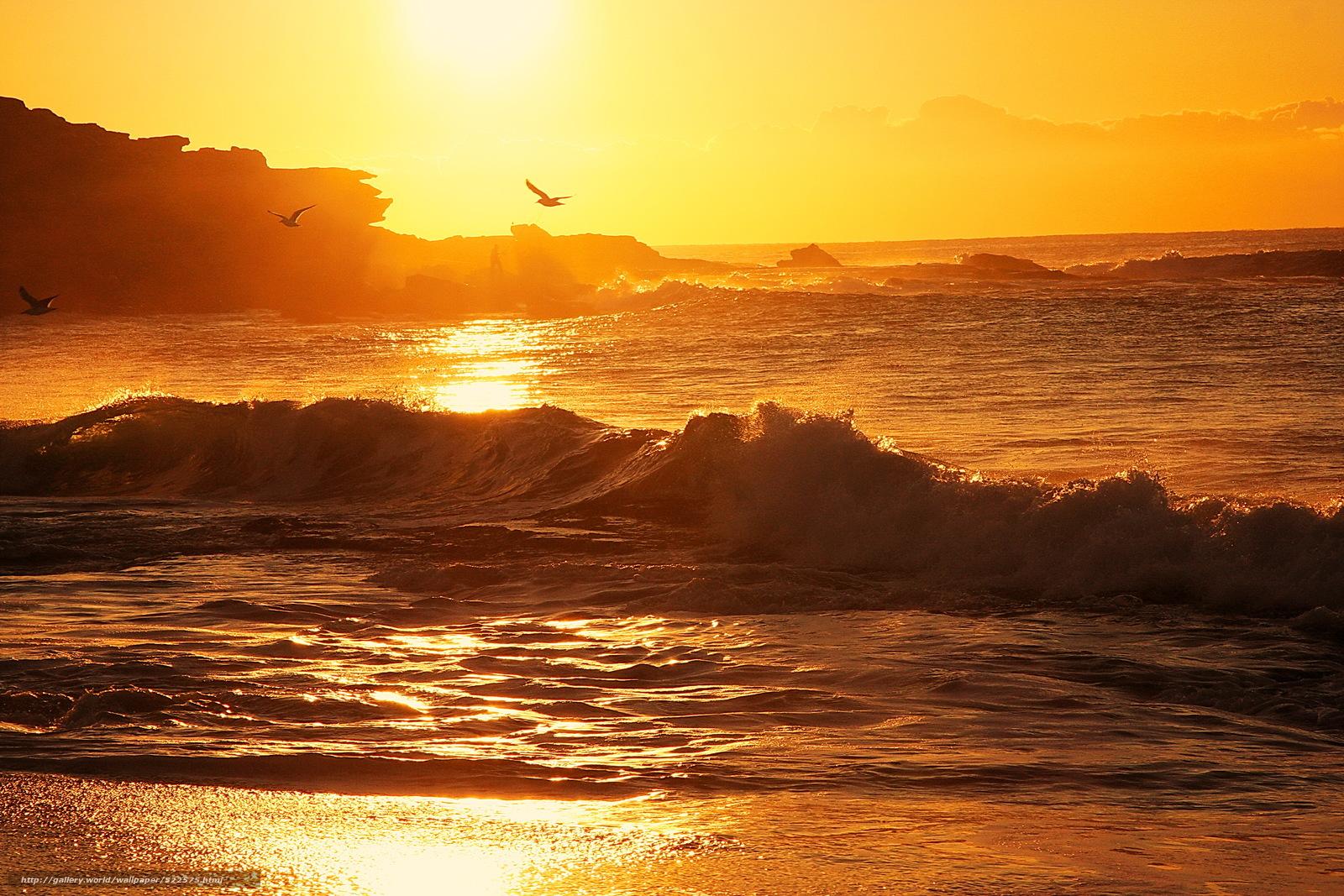 Scaricare gli sfondi alba mare gabbiani paesaggio for Desktop gratis mare