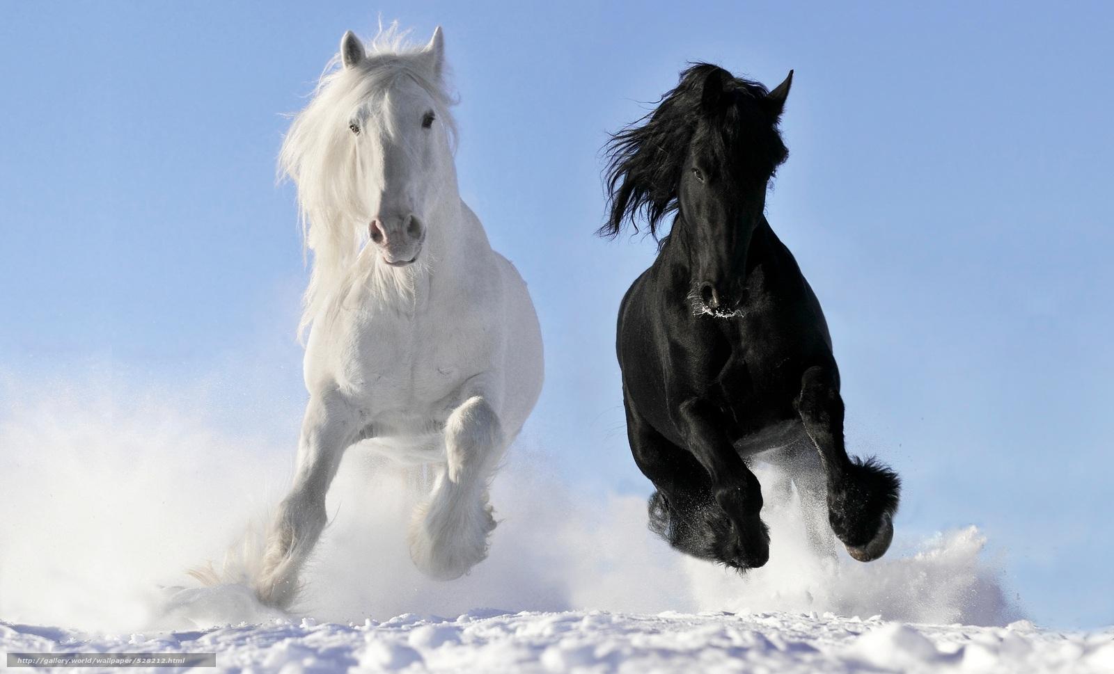 download hintergrund pferd pferde wei rabe freie. Black Bedroom Furniture Sets. Home Design Ideas