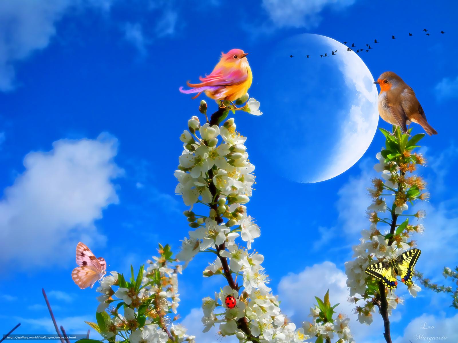 tlcharger fond d 39 ecran branch fleurs oiseaux papillon fonds d 39 ecran gratuits pour votre. Black Bedroom Furniture Sets. Home Design Ideas
