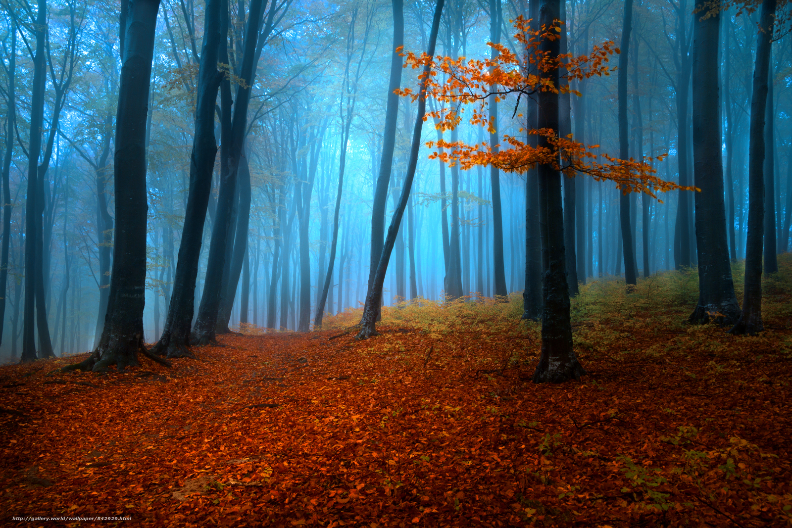 fall woods backgrounds wallpapers - photo #47