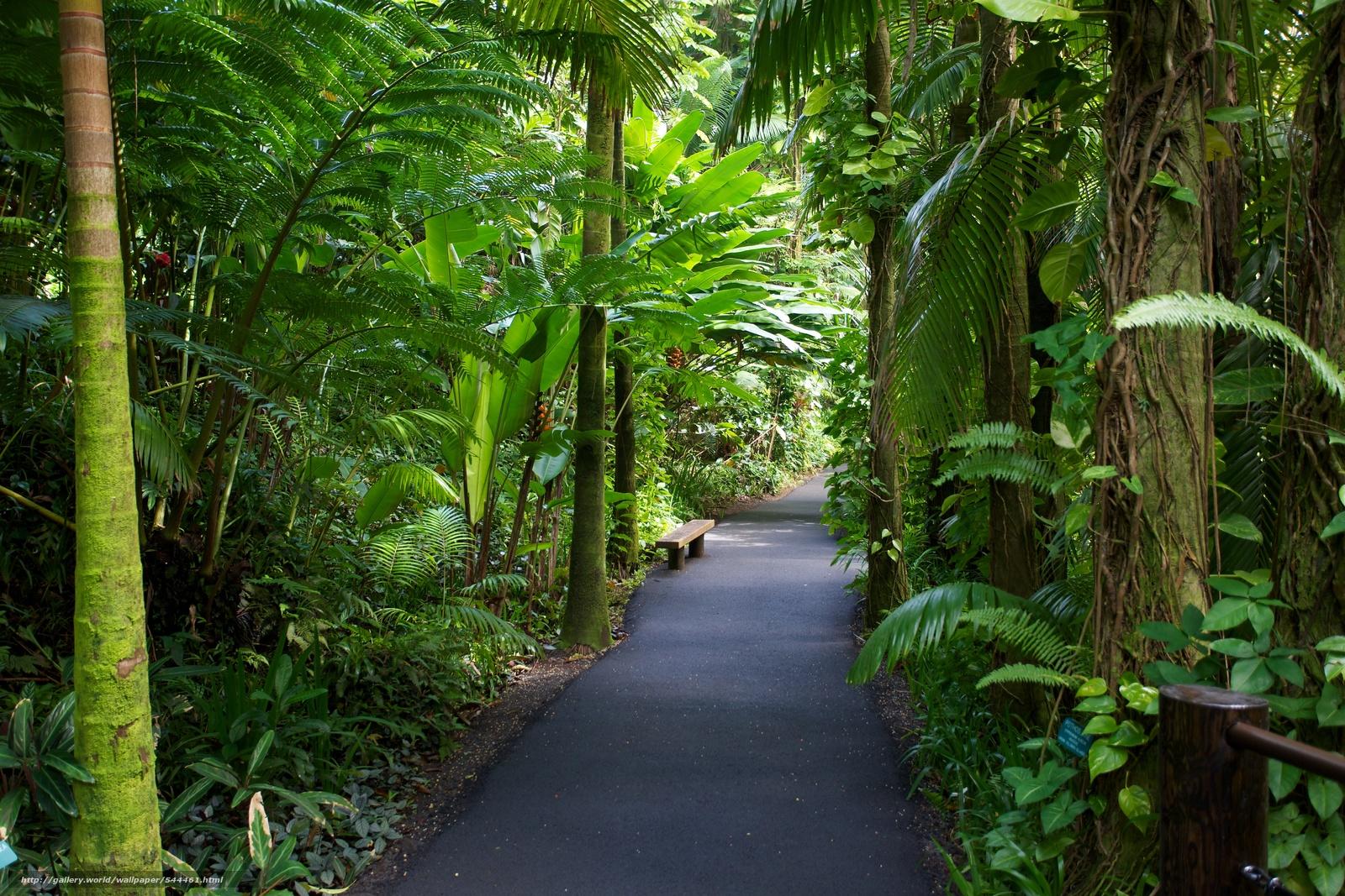 Download Wallpaper Hawaii Tropical Botanical Garden Garden Nature Free Desktop Wallpaper In