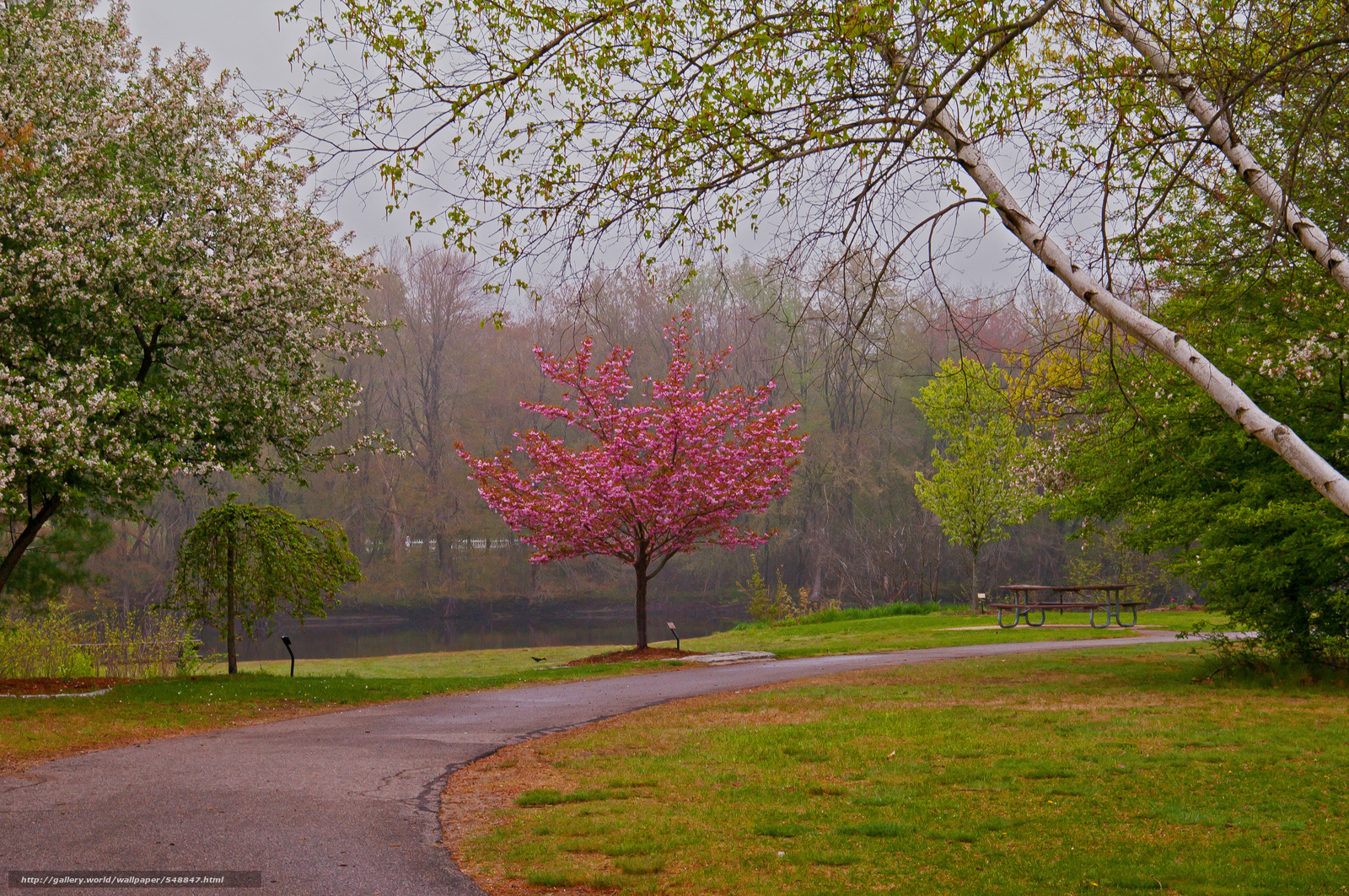 Скачать обои сад парк дорога деревья