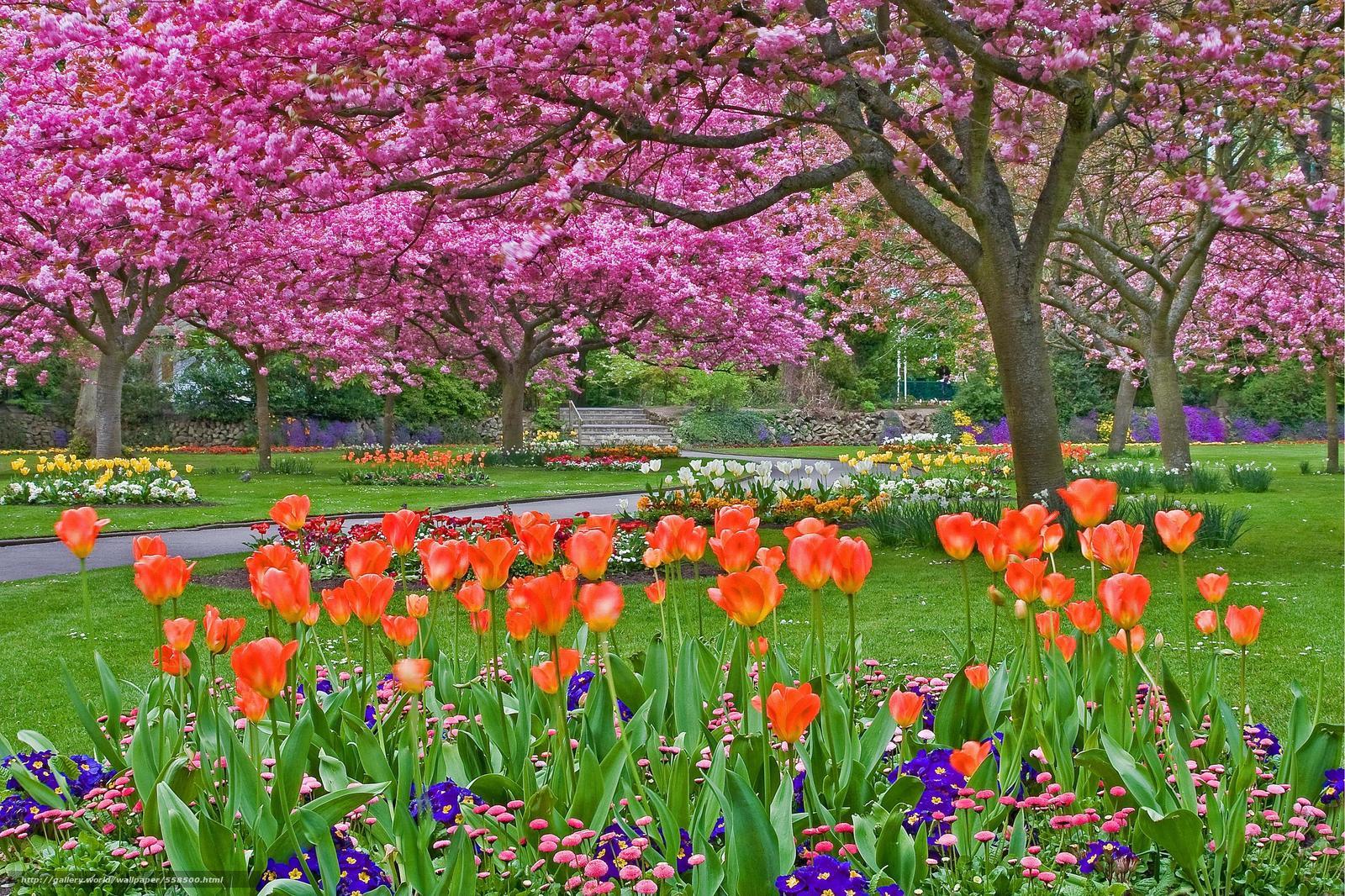 Tlcharger Fond D'ecran Jardin, Parc, Arbres, Fleurs Fonds