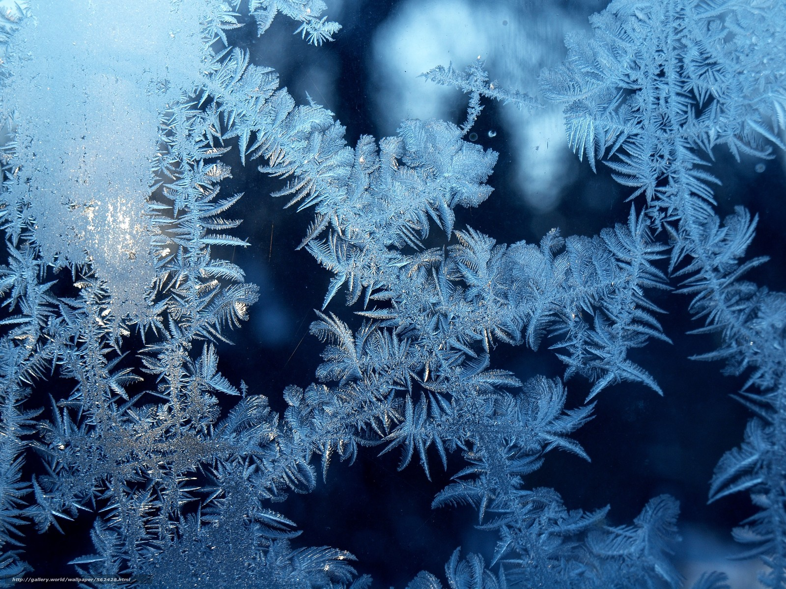 frost on glass wallpapers - photo #18