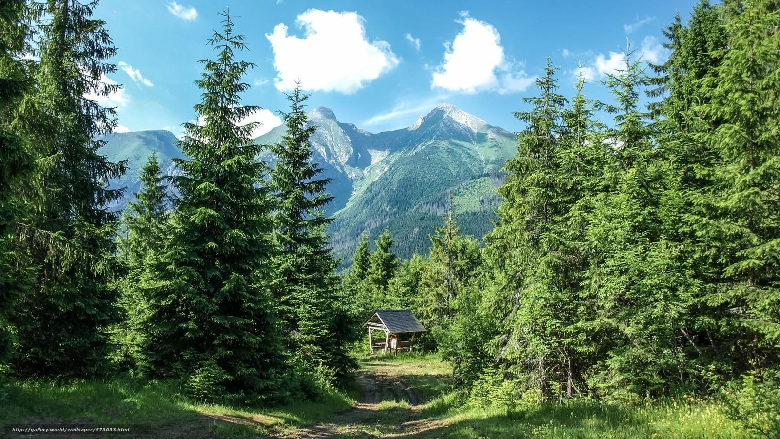 Скачать обои лес горы деревья пейзаж