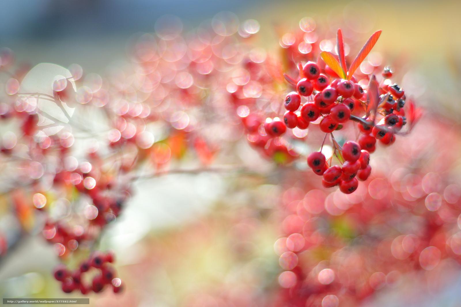 Картинки листья красные