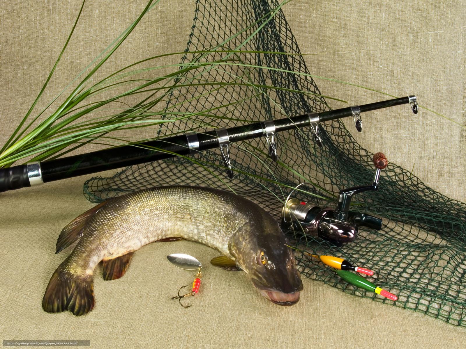 Tlcharger Fond D 39 Ecran Brochet Fish Herbe Filature
