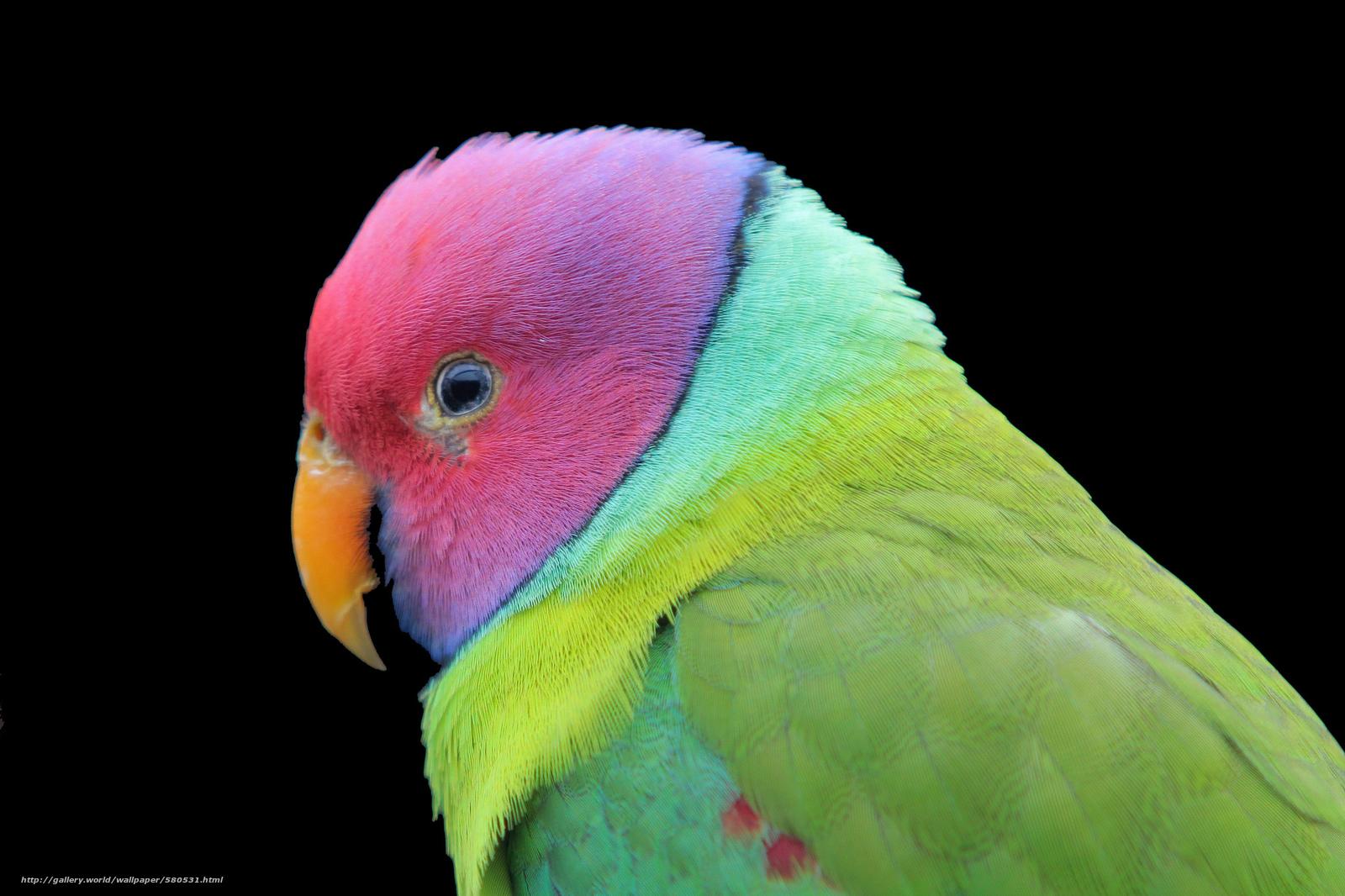 Tlcharger fond d 39 ecran oiseau couleur perroquet fond for Oiseau couleur
