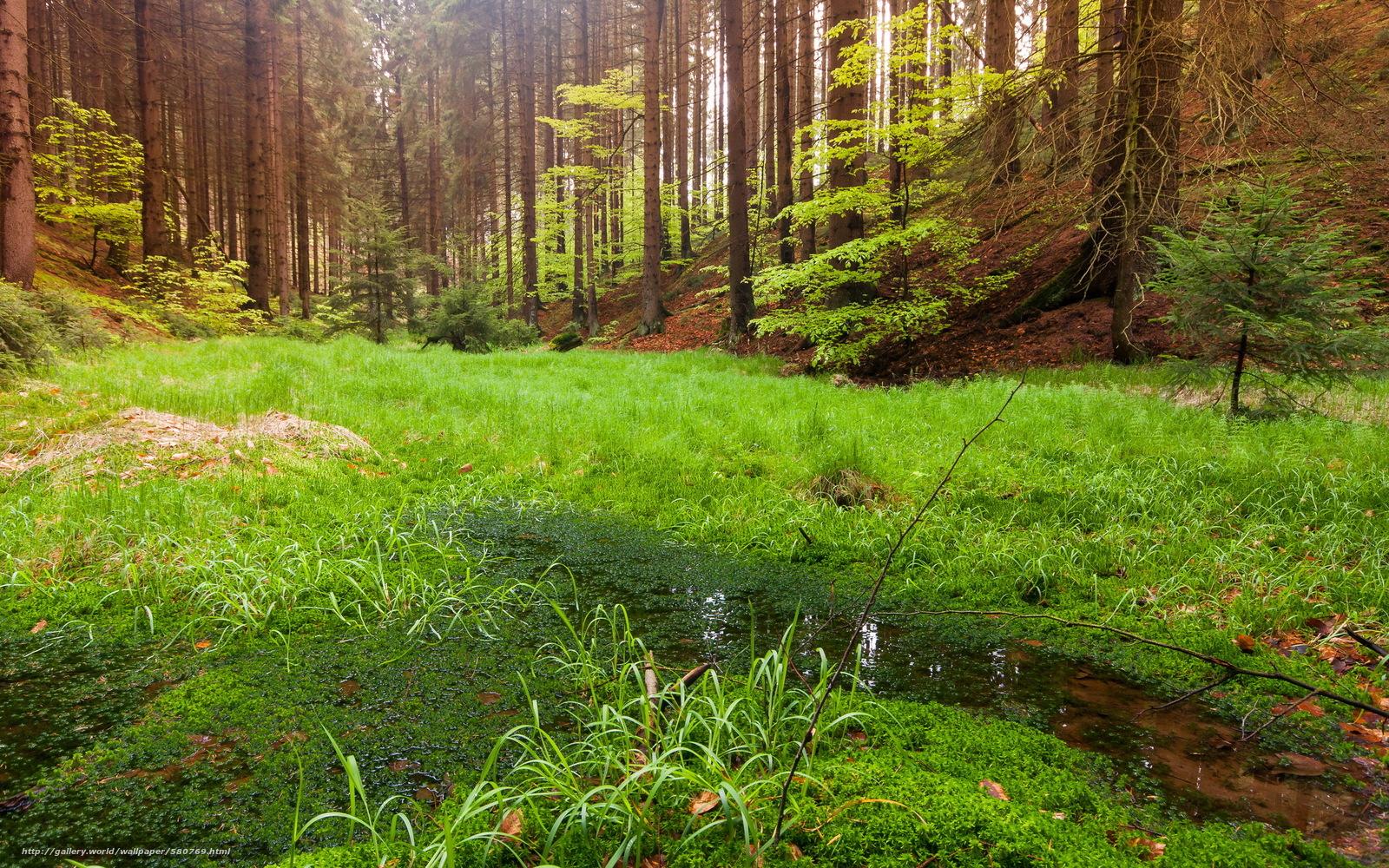 Download hintergrund natur, wald, landschaft freie desktop tapeten in