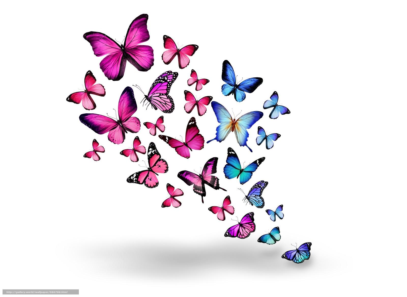 Scaricare gli sfondi blu rosa farfalle sfondi gratis per for Sfondi farfalle gratis