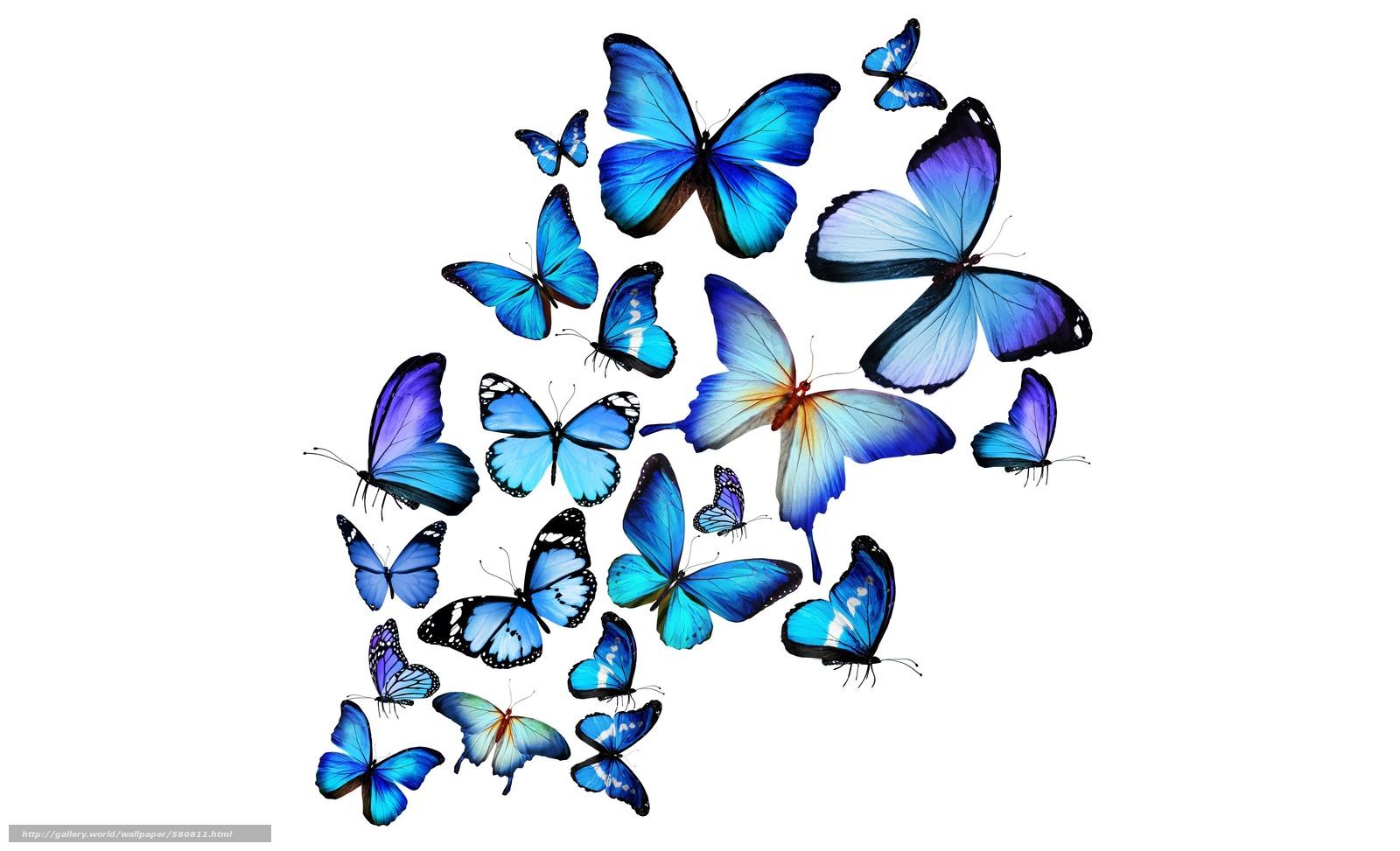 Scaricare gli sfondi farfalle blu sfondi gratis per la for Sfondi farfalle gratis
