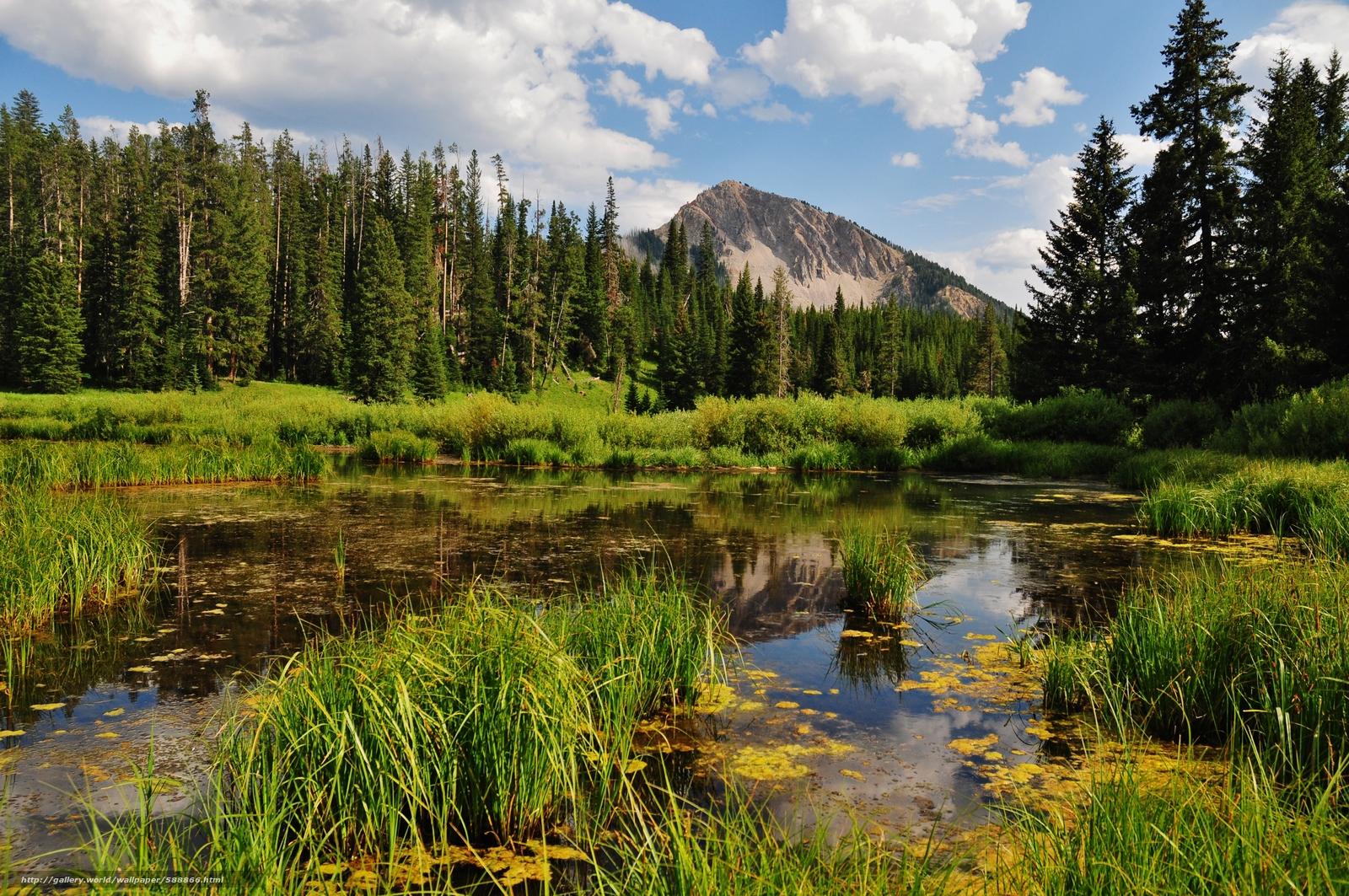 Fondo Escritorio Bonitas Montañas Nevadas: Descargar Gratis Montañas, Bosque, Pantano, Paisaje