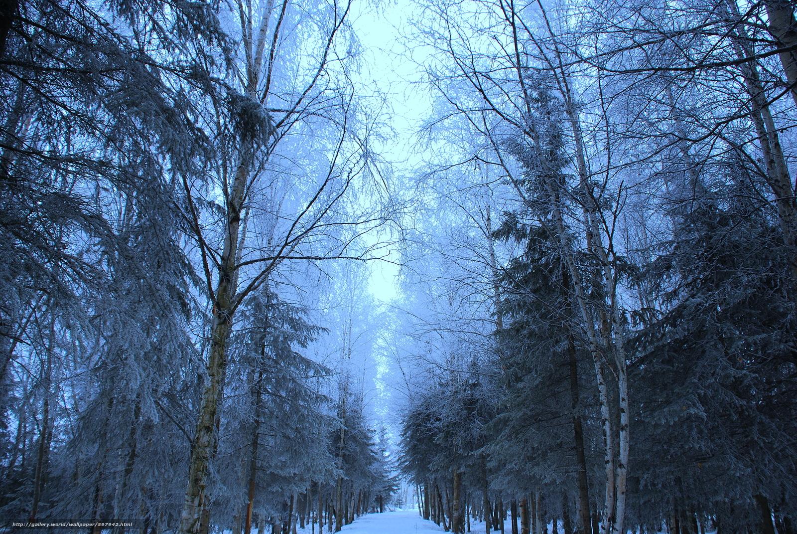 Скачать обои зима лес деревья дорога