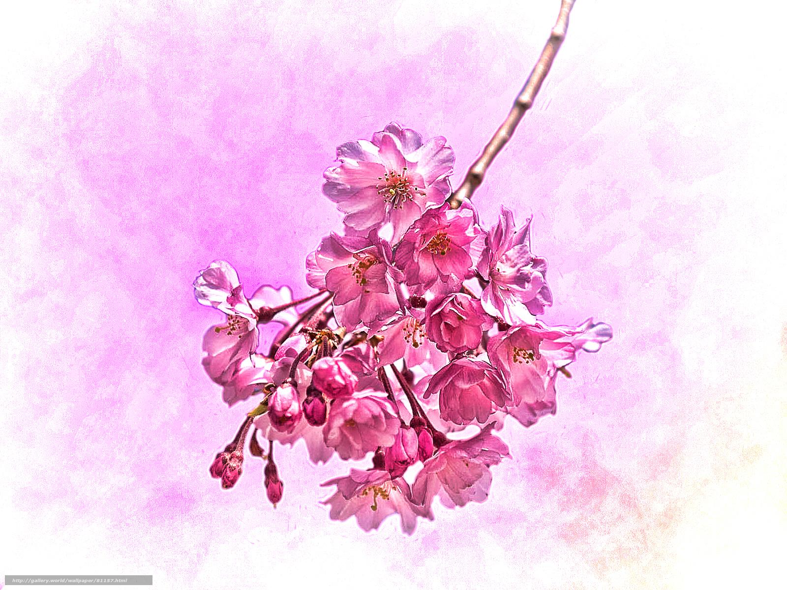 Цветы  Шаблоны презентаций  Сообщество взаимопомощи