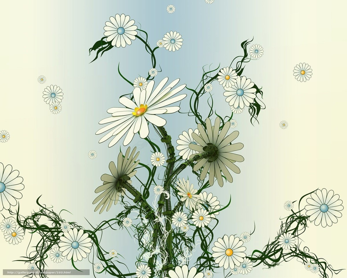 ромашки, цветы, плоский, сухой, вялый