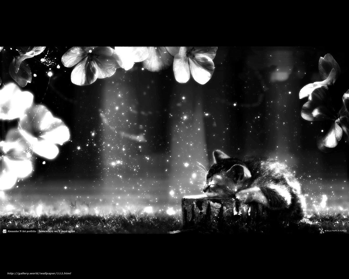 темнота, котенок, сны, лучи, мечты, цветы