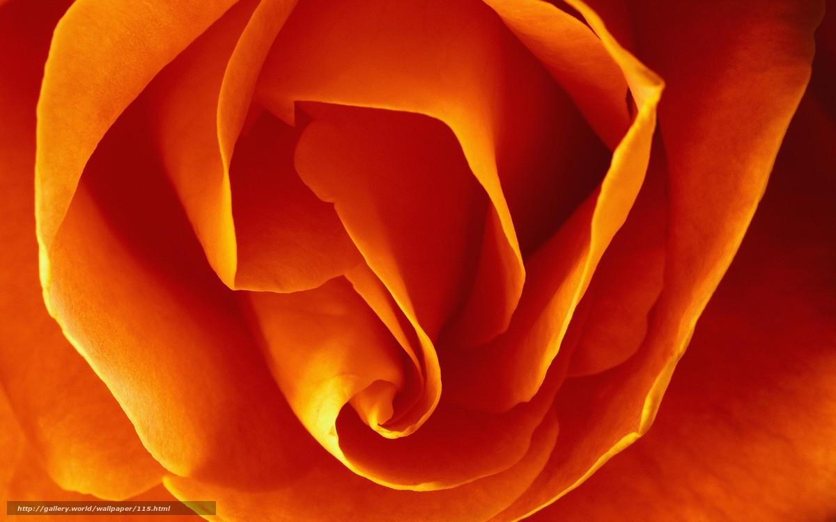 цветок, макро, жёлтый