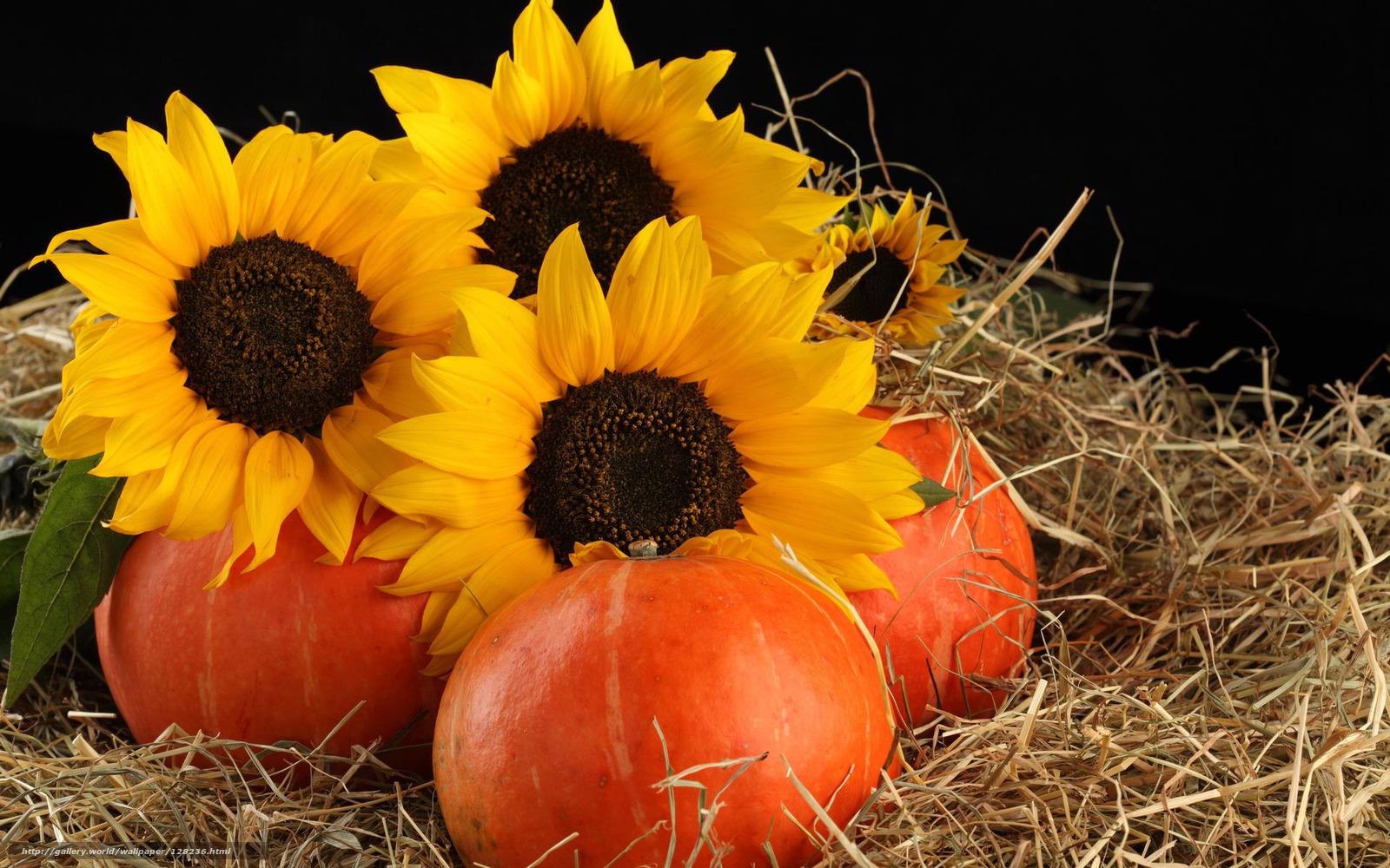 цветы похожие на подсолнухи название и фото