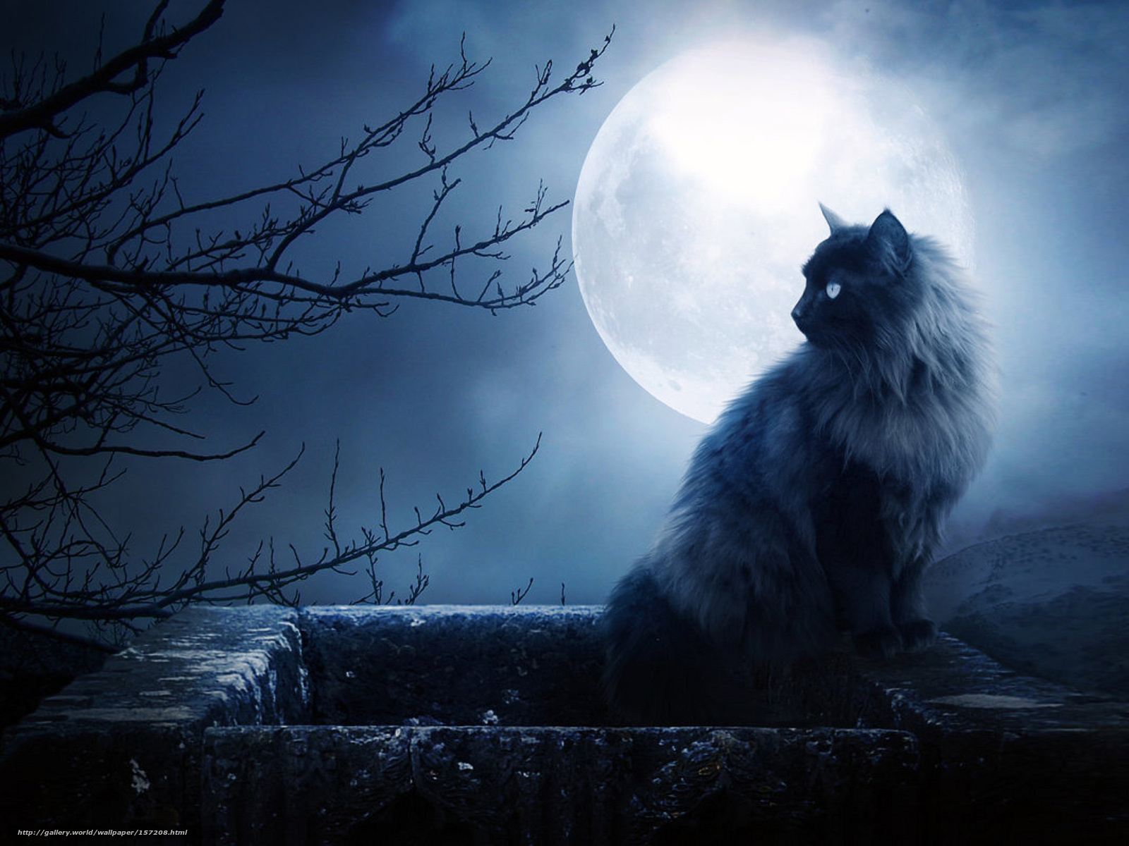 луна кот обои на рабочий стол № 573623 бесплатно