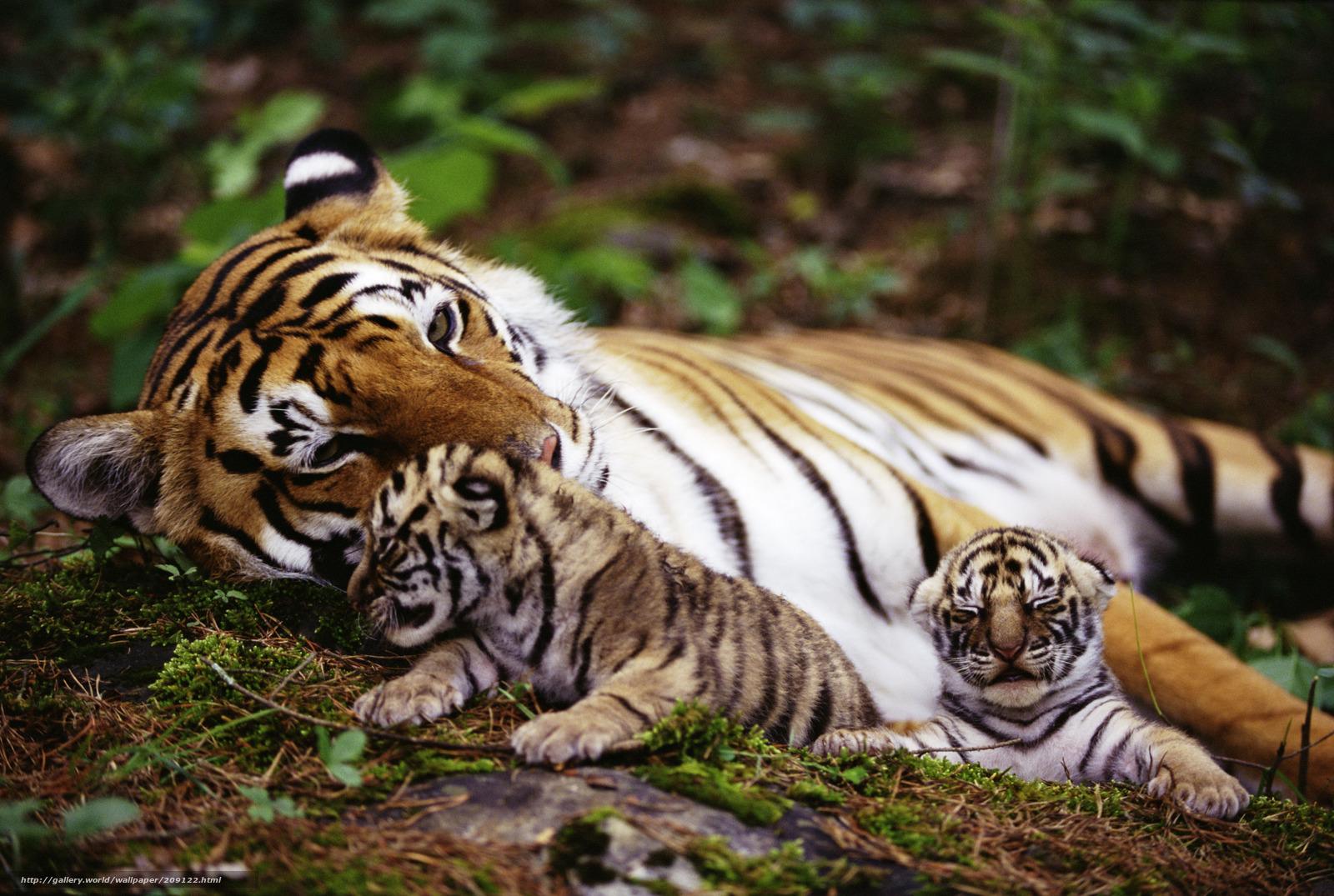 животные обои: