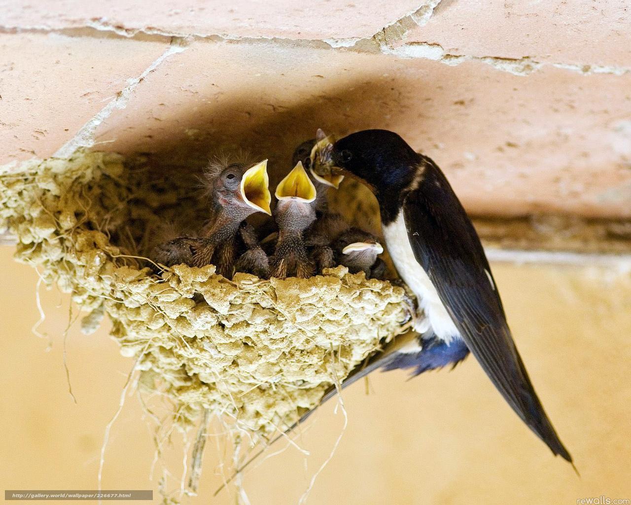 Как сделать птичку маленькую для маленького гнезда