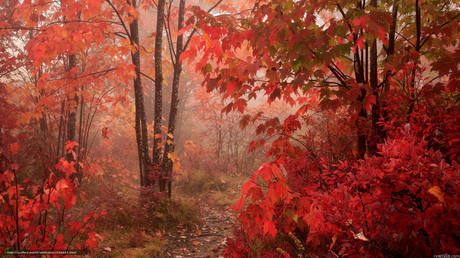 Картинка осенний лес - c