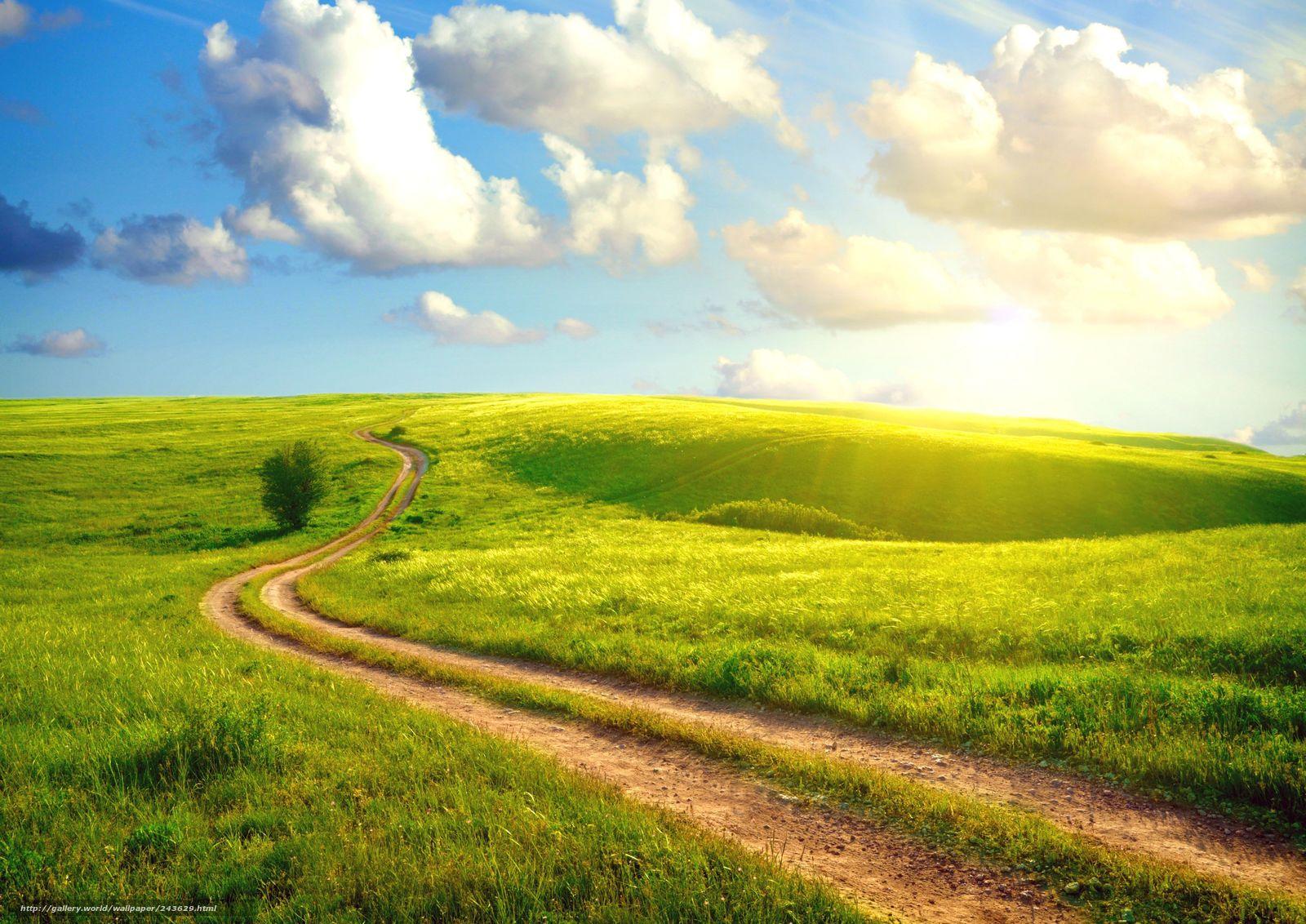 Дорога густая трава лето солнце