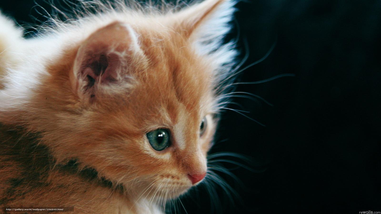 почему котенок лижет обои коробки-чп1