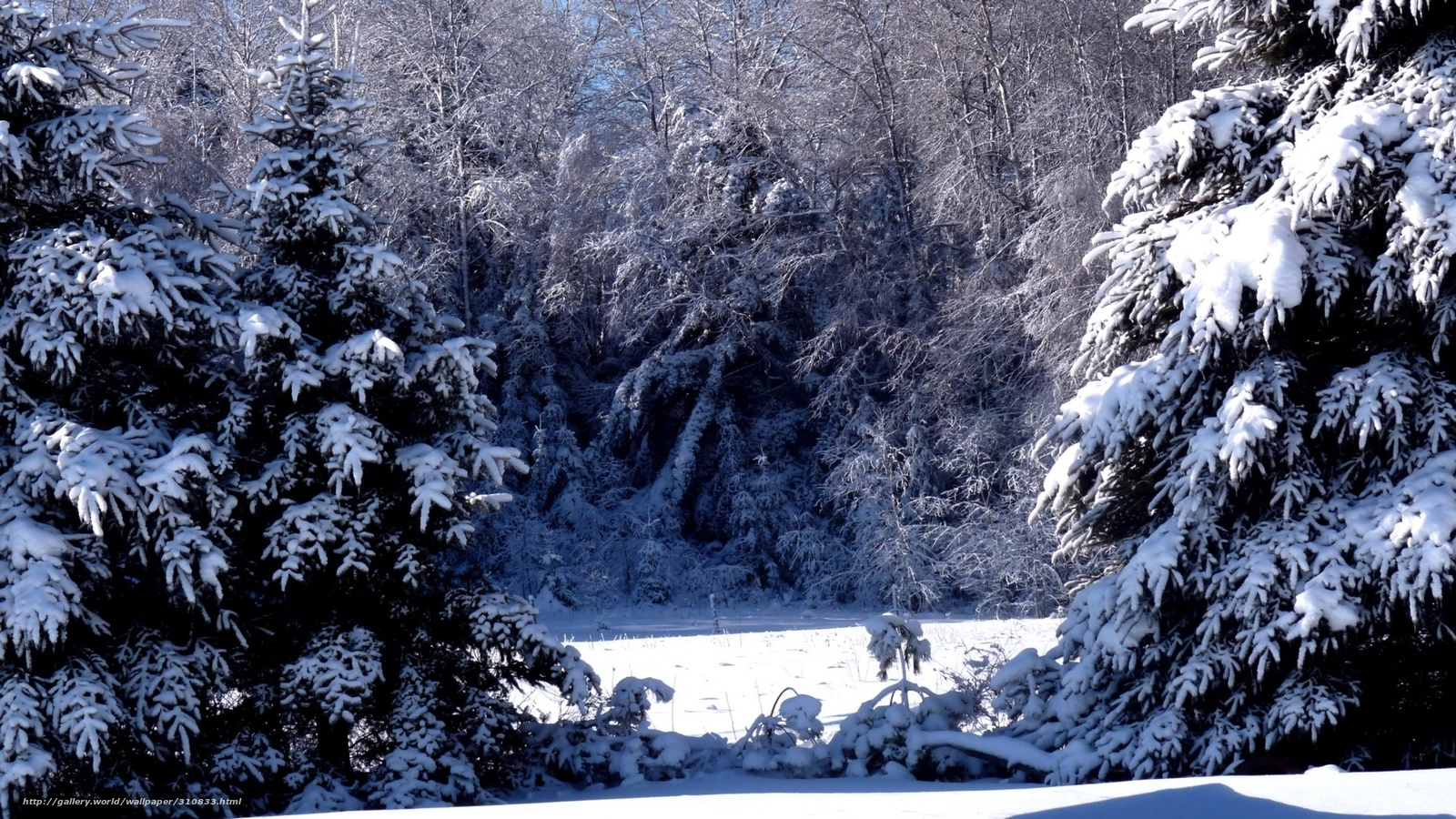 Сказочный, зимний, лес, фото, обои ...: koto-fot.ru/gdefon/kotofots/full/310833-kotofotsfull