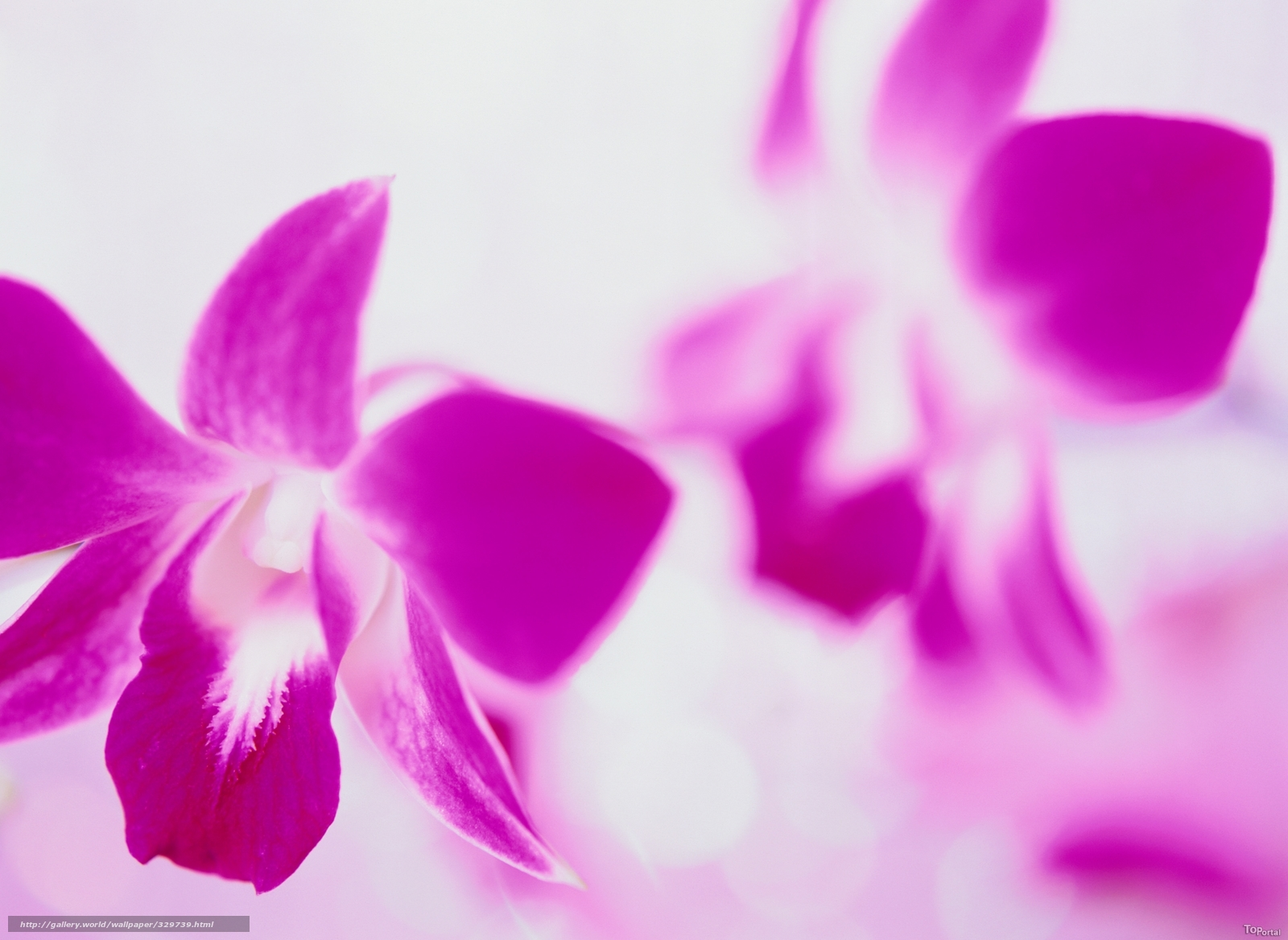Dark purple floral background