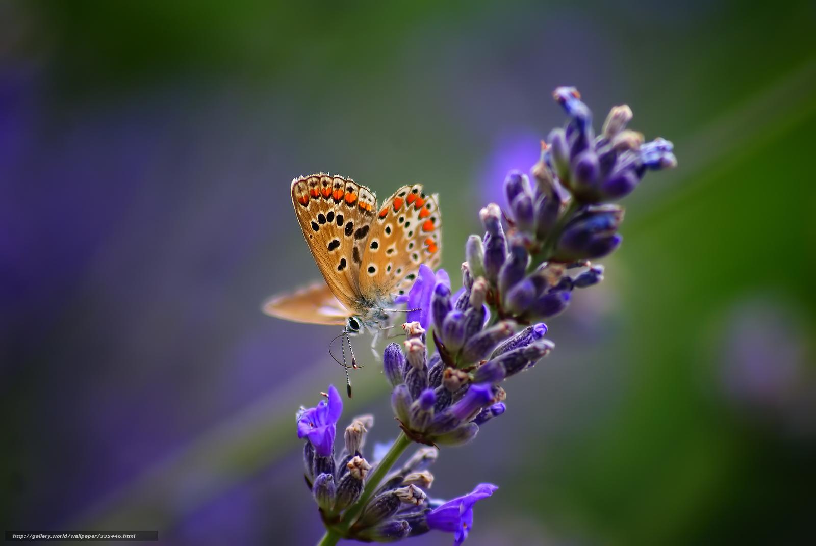 Бабочка насекомое цветок растение