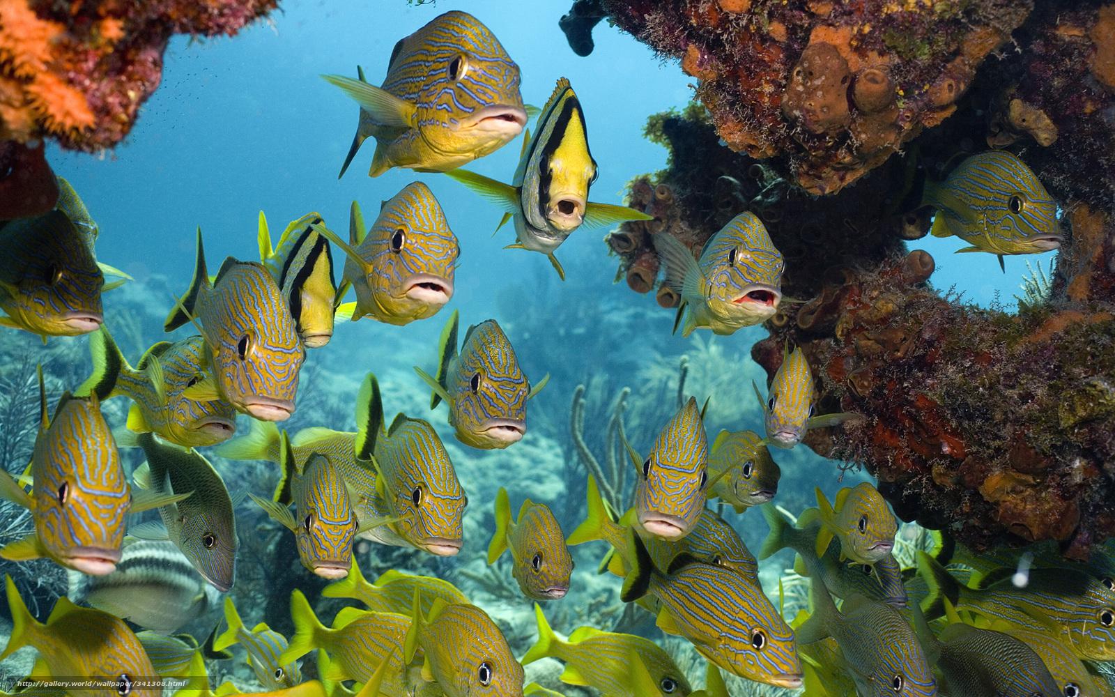 Подводный мир море тропические рыбы